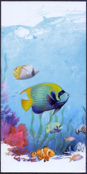 Angelfish (Pomacanthus imperator), postcard without stamp, 2012