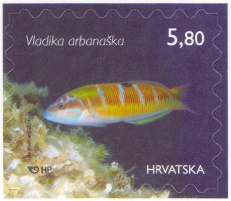 Ornate Wrasse, self-adhesive stamp, MINT, 2014