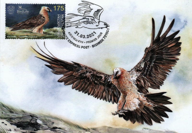 Bearded Vulture, maximum card, 2021