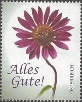 Flowers - Coneflower (Echinacea sp.), MINT, 2013