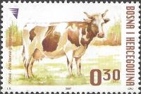 Cow, MINT, 2007