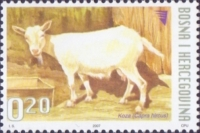 Goat, stamp, MINT, 2007