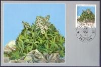 The Flora of BiH: Croatian Sibirea (Sibiraea croatica), maximum card, 1998