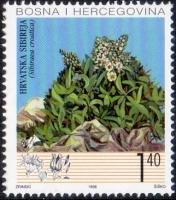 The Flora of BiH: Croatian Sibirea (Sibiraea croatica), MINT, 1998