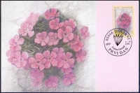 The Flora of BiH: Freyn's Pink (Dianthus freynii), maximum card, 1999