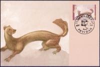 The Fauna of BiH: Pine Marten (Martes martes), maximum card, 1999