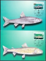 Fish, set of 2 maximum cards, 2001