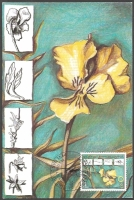 The Flora of BiH: Beck's Violet (Viola beckiana), maximum card, 2002