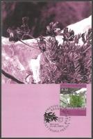 The Flora of BiH: Prenja Crazyweed (Oxytropis prenja), maximum card, 2003