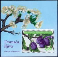 Flowers and fruit of plum (Prunus domestica), souvenir sheet, MINT, 2009