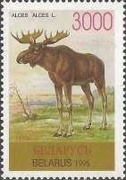 Moose (Alces alces), MINT, 1996