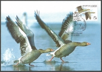 Bird of the Year. Greylag Goose (Anser anser), maximum card, 2009