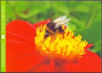 Large earth bumblebee (Bombus terrestris), postcard without stamp, 2013