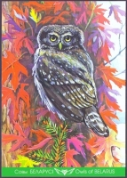 Pygmy Owl, postcard without stamp, 2013