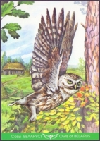 Little Owl, postcard without stamp, 2013