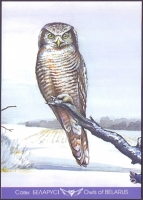 Hawk Owl (Surnia ulula), postcard without stamp, 2013