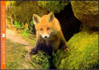 Red Fox, 1st postcard without stamp, 2014