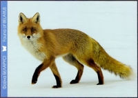 Red Fox, 2nd postcard without stamp, 2014