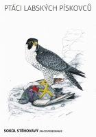 Peregrine falcon (Falco peregrinus), postcard without stamp, issue date 2014