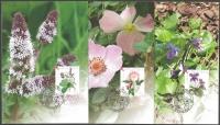 Croatian Flora - Medicinal Plants, set of 3 maximum cards, 2004
