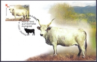Istrian Ox, maximum card, 2007