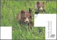 Croatian Fauna - Brown Bear, maximum card, 2011