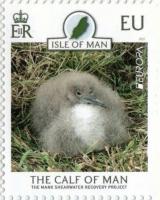 Bird, stamp, MNH, 2021