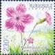 Flower - Dianthus, MINT, 2014