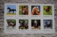 """Horses in Austria"", book, hard cover, 41 page, lovely pictures, 8 mint stamps,German text"