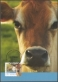 Cows, maximum card, 2012