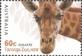 Australian Zoos: Giraffe, MINT, 2012