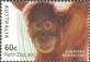 Australian Zoos: Sumatran orangutan, MINT, 2012