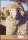 Wool Sheep, maximum card, 2012