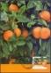 Oranges, maximum card, 2012