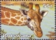 Giraffe, stamp, MINT, 2003