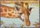 Giraffe, stamp, MINT, 2003