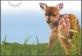 Baby Wildlife - Deer,  postcard, 2013