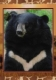 Grizzly bear, postcard without stamp, issue date 2014
