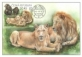 South African Lions and Chimpanzees, maximum card, 2017