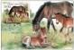 Exmoor Ponies, maximum card, 2021
