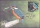 Bird Of The Year - Common Kingfisher, maximum card, 2014