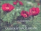 Peony (Paeonia tenuifolia), souvenir sheet, MINT, 2016