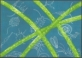 Cyanobacteria (blue-green algae), postcard without stamp, 2007