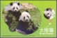 Giant Panda, postcard, 2010