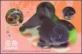 Goldfish, postcard, 2010