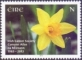 Trumpet Daffodil (Narcissus pseudonarcissus), stamp, MINT, 2013