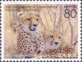Cheetah, stamp, MINT, 2013