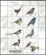 Urban birds, souvenir sheet, MINT, 2011