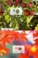 Leaves, set of 3 maximum cards, 2013