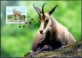 Young animals of the Alpine region - Chamois, maximum card, 2013